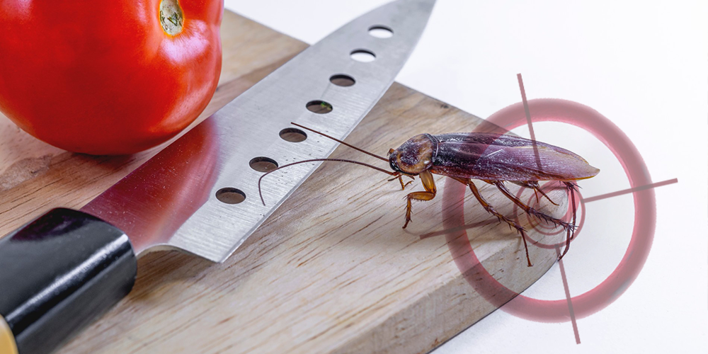 Domestic-pest-popup