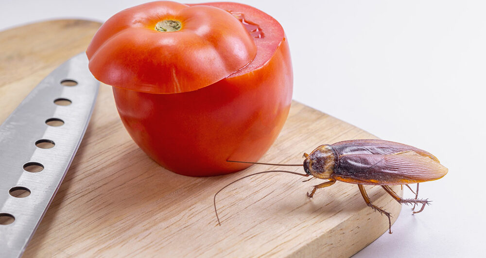 cockroach-in-kitchen
