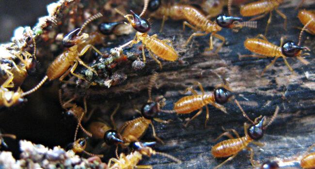 termists-close