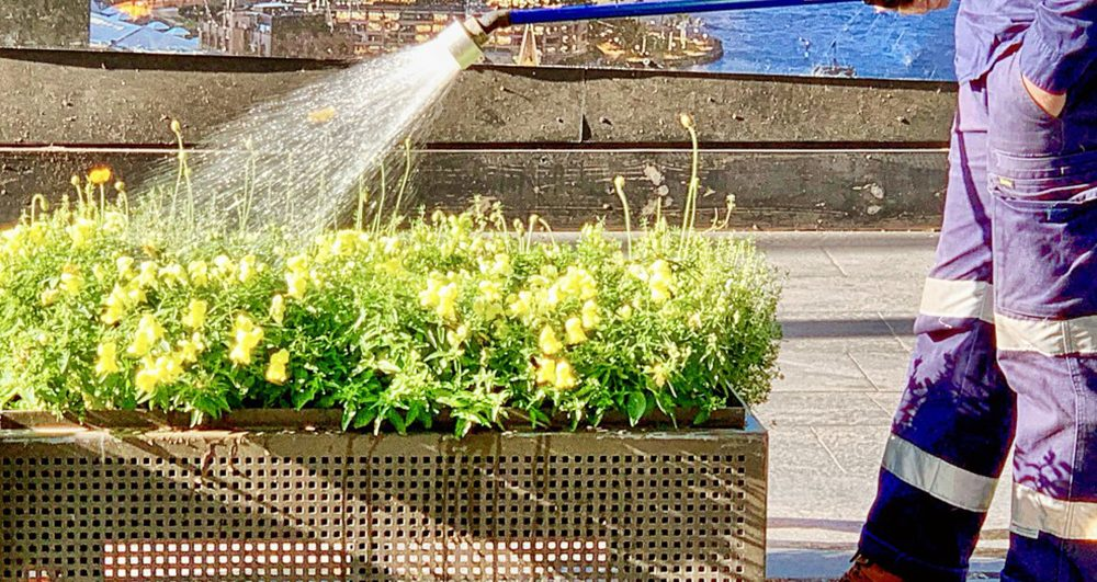 city-gardening-a-city-council-gardener-watering-flowers-in-planter-boxes-in-the-city-cbd-with-a-water_t20_lRZyVQ