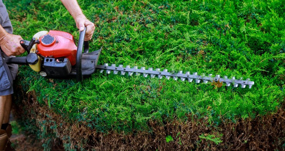 gardener-an-hedge-using-trimmer-in-the-garden_t20_gR7GjN