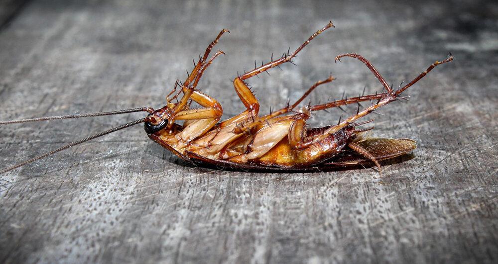 cockroach-pest-control