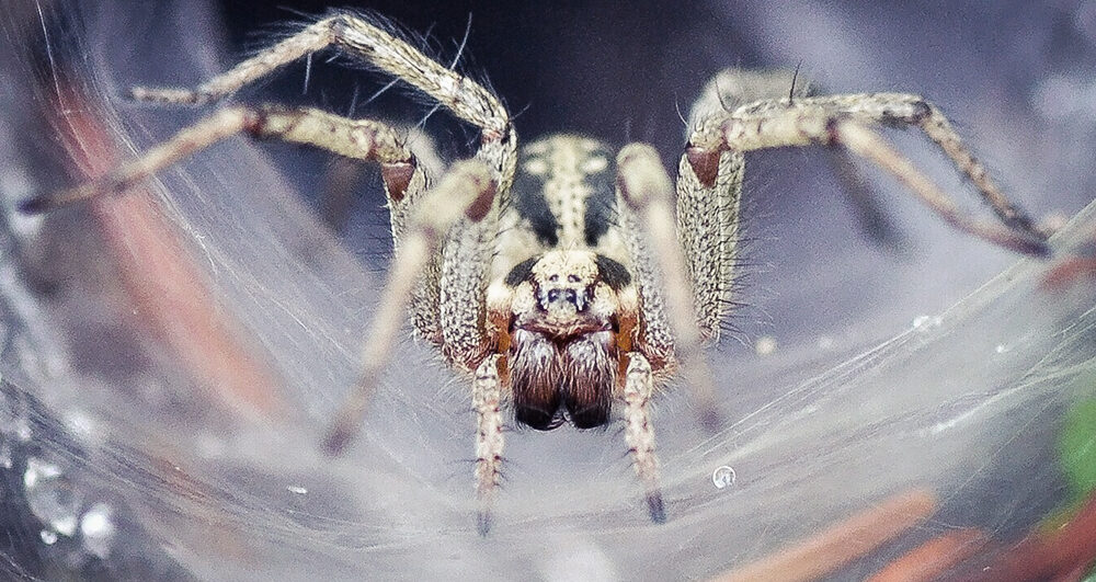 spider-close-up-pest-control