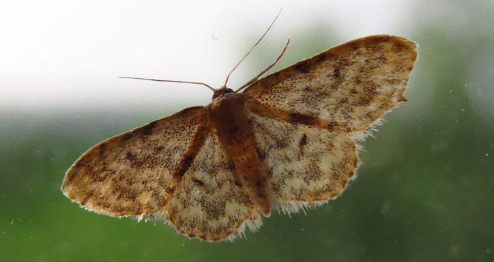 moth_ug-large